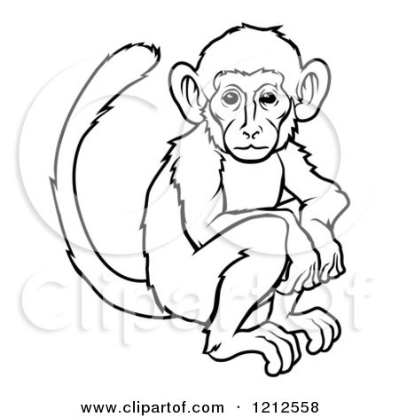 Of Monkey Outline Drawing