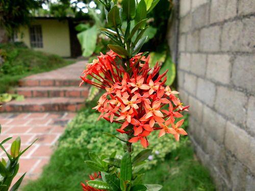 081 Otra flor