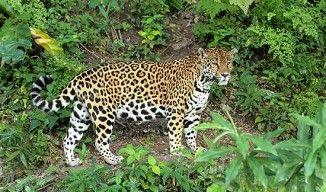Guatemala destaca conservación de más de cien especies nuevas