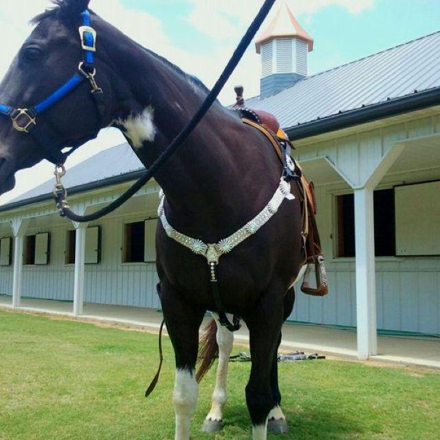"Beautiful horse tack! Fb ""giddy up"" 601 325 5599 let's talk..."
