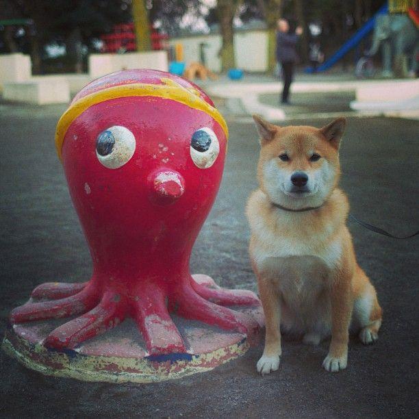 Shiba and Tako-Yaki character Photo by marutaro