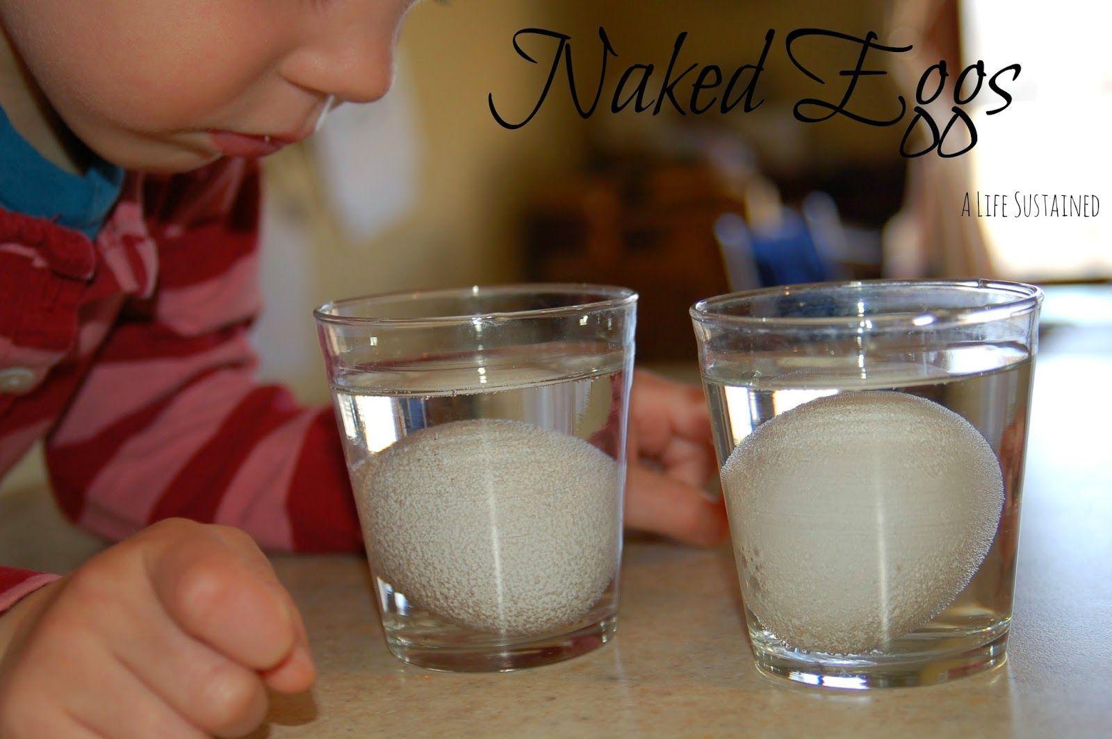 Naked Eggs Toddler And Preschool Science Experiment Reggio Provocation Montessori