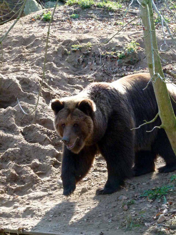 Vorbereitungen für einen Aquarellkurs im Schweriner Zoo | Bären im Schweriner Zoo (c) Frank Koebsch (2)