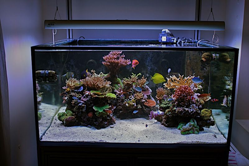 Aquascaping Show Your Skills Page 5 Reef Central Online Community Aquascape Aquarium Aquarium Fish Tank