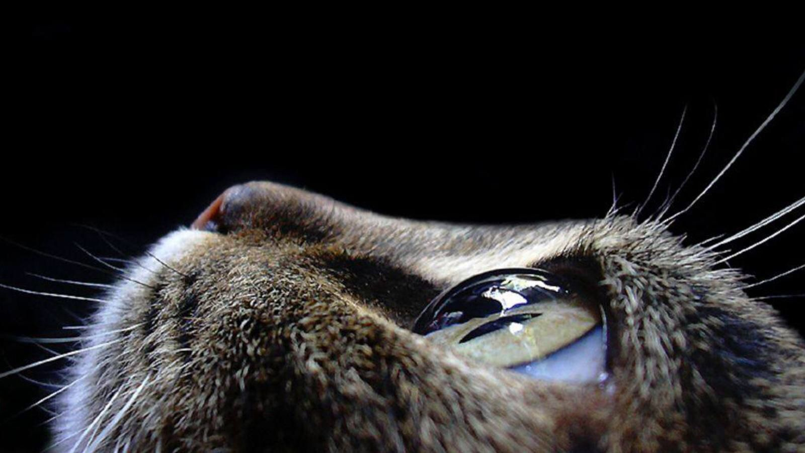 AMAZING & AWESOME cat eye close up.. Just PERFECT