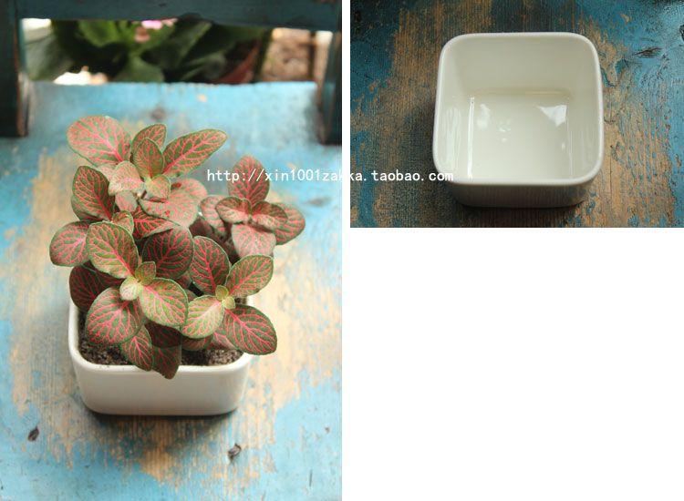 Fleshier plant flower pot flower japanese style small flower pot white ceramic zakka desktop Medium square-inFlower Pots & Planters from Hom...