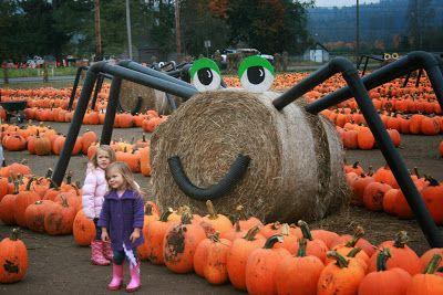 Hay Spider At Pumpkin Patch Pumpkin Pumpkin Display Scary Pumpkin