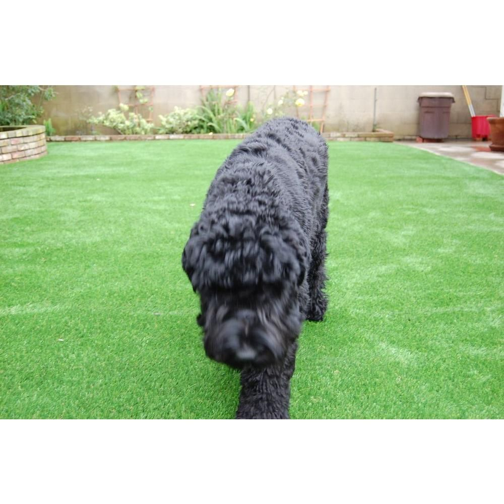 GREENLINE Pet/Sport 60 Artificial Grass Synthetic Lawn