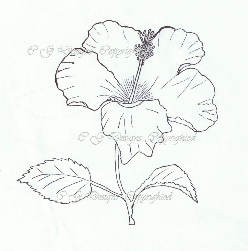 Hibiscus Flower Drawing Outline Google Search Hibiscus Bush