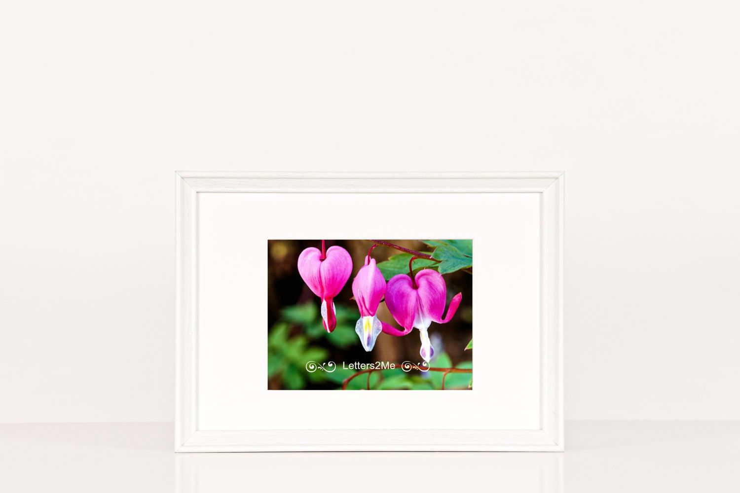 Bleeding Hearts Pink Unique Heart Shaped Flowers Valentines