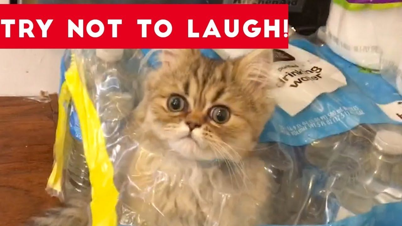 Super Funny Dog And Cat Animal Videos Watch And Die From