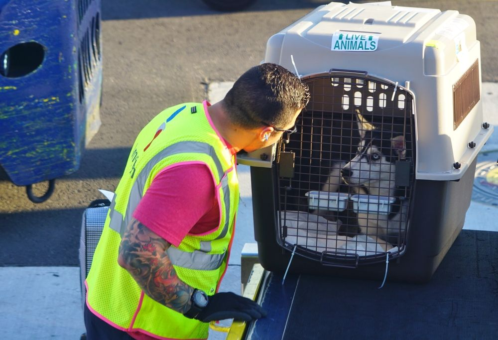 Why is it so hard to keep pets safe on a plane? Flying