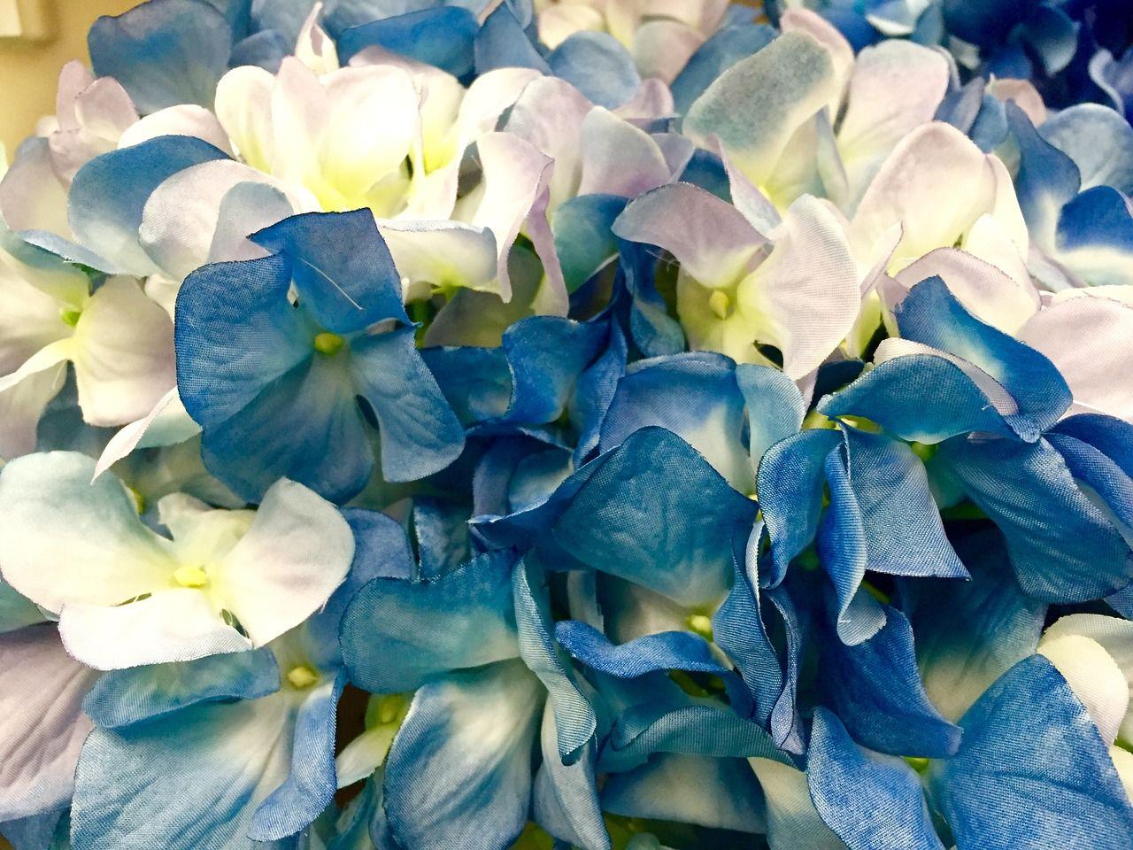 Wedding Hydrangea Blue White Flower Bloom Blossom Wedding