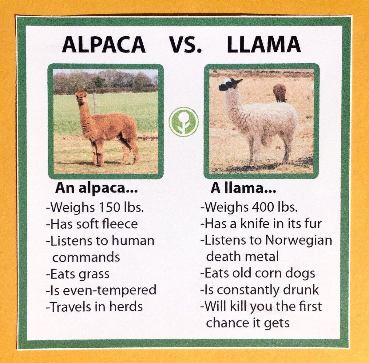 Alpaca Vs Llama Alpaka Lustig Funny Shit Alpaka