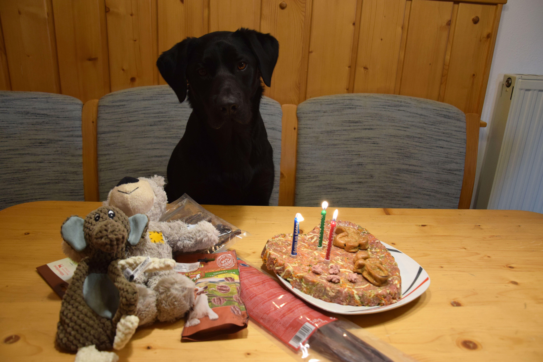 Pin Von Jack Auf Reisen Camping Mit Auf Dogblogger Hundeblogs Selbstgemacht Hundekuchen Geburtstagstorte
