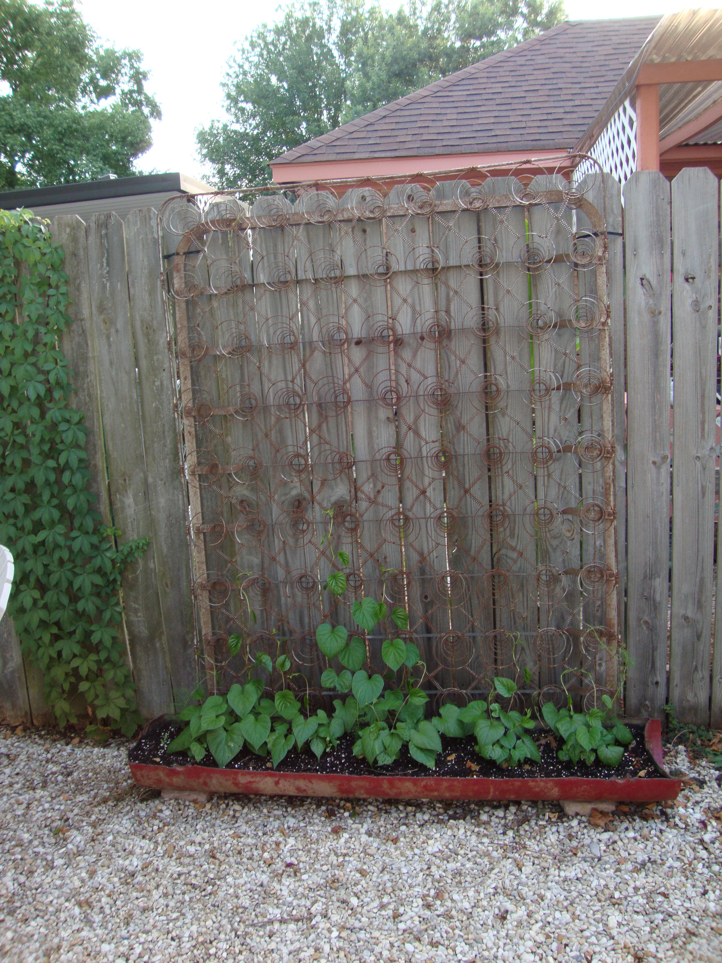 Old Box Spring Trellis With Images Backyard Garden Layout