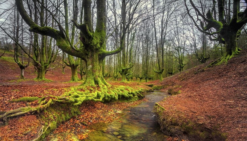 Un Bosque Místico En España