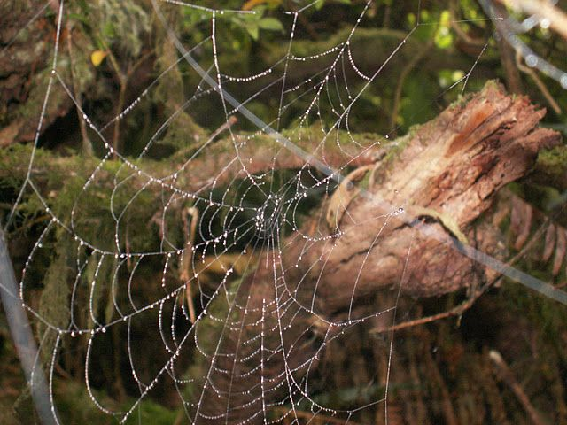 Macro of a Web full of humidity from Hot Springs Cove.