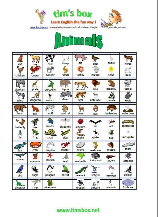 Super timsbox-poster_animals | anglais | Pinterest | Anglais, Langue et  FN41