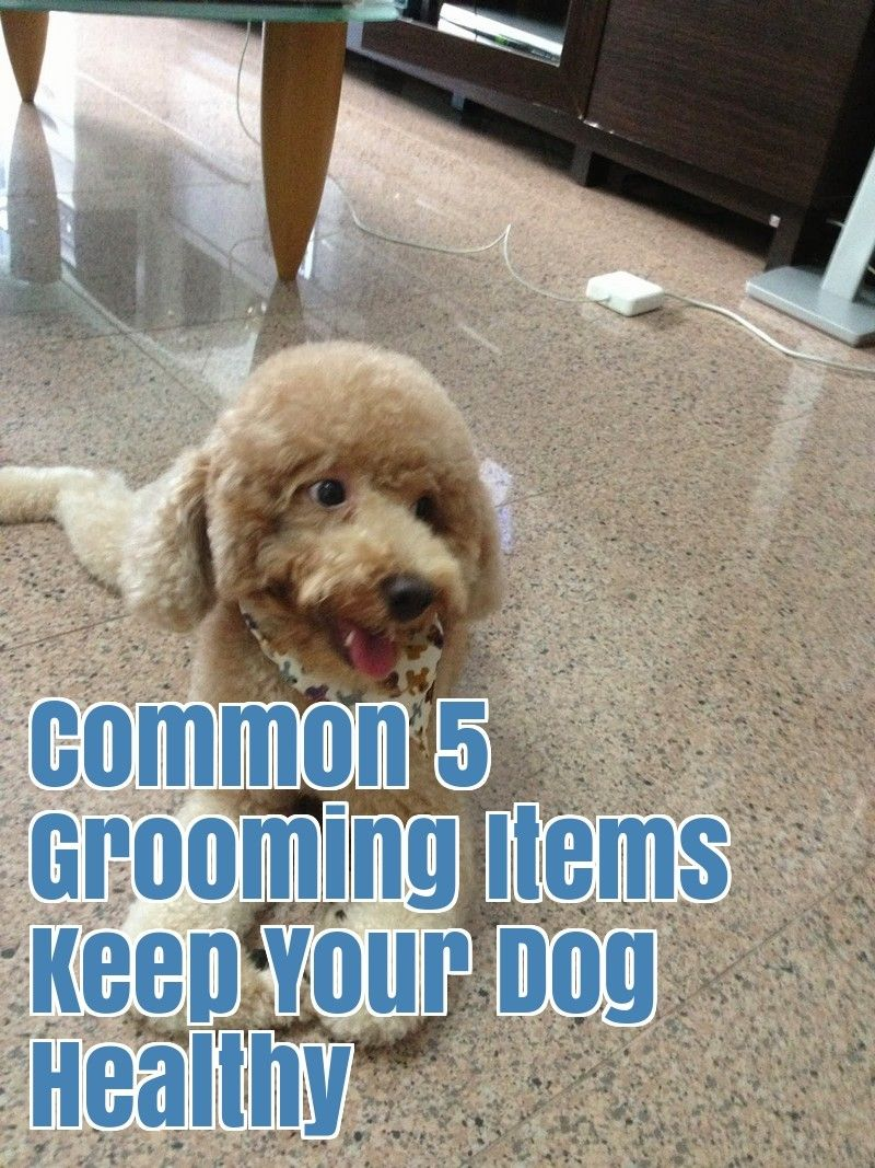 Most Preferred 5 Dog Grooming Tips Dog Grooming Dog Grooming