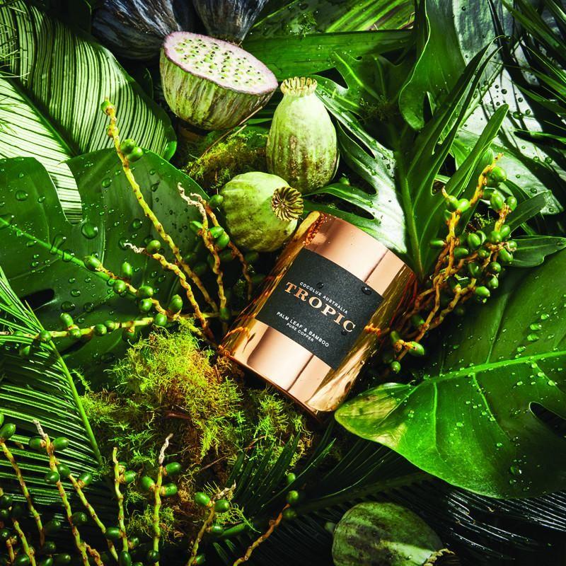 Palm Leaf & Bamboo