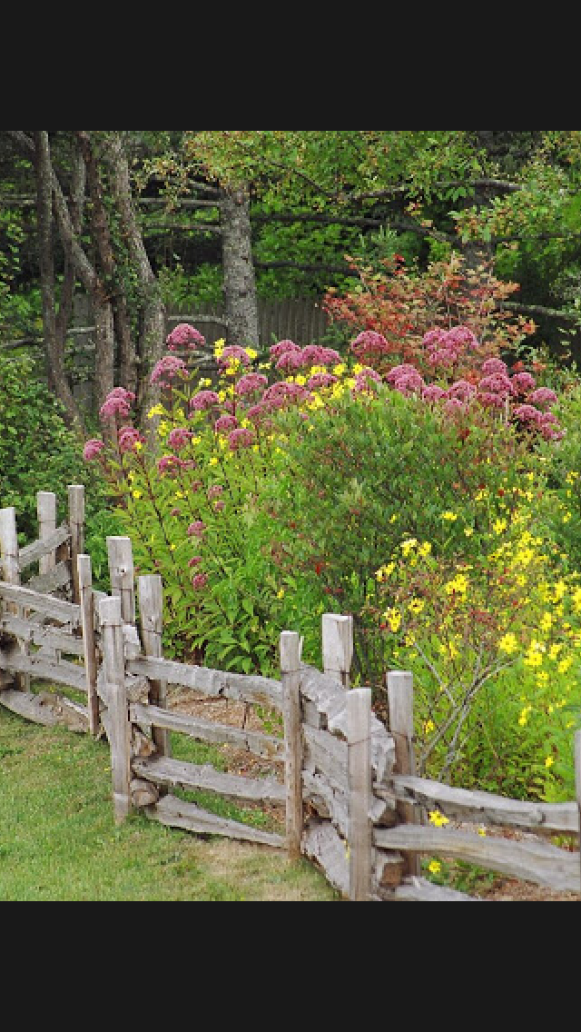 pin by andrea beggs on flowers cottage garden rustic on backyard fence landscaping id=76372