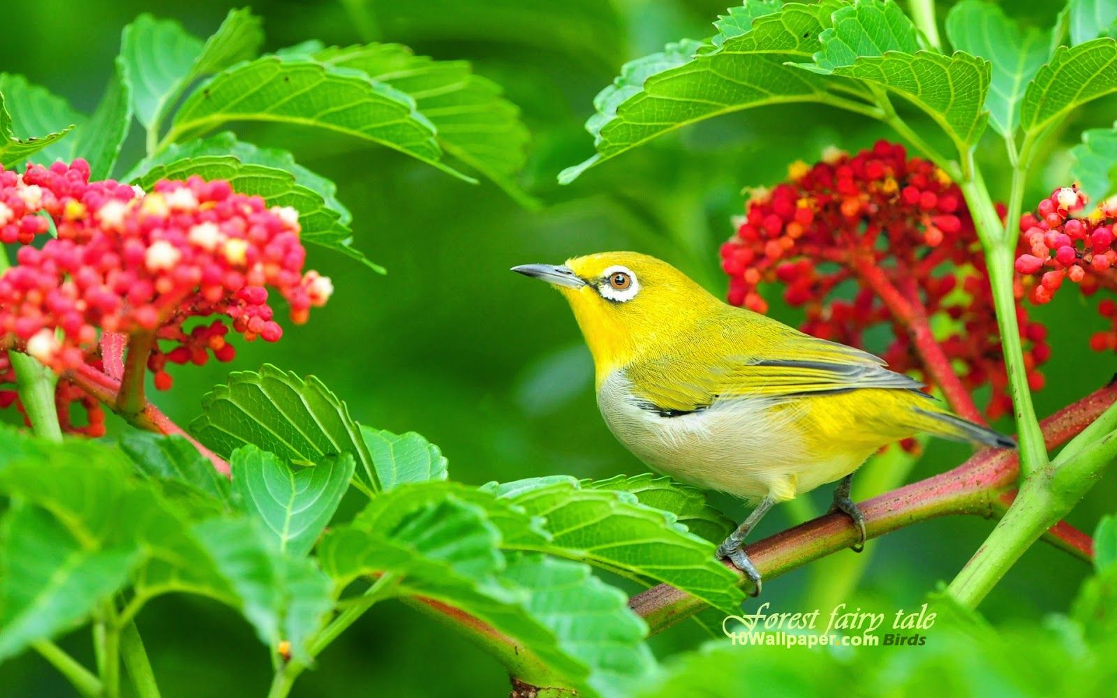 Amazing Wallpaper High Quality Bird - 836c28846238fbc3cddd2a94b58b6922  Photograph_36760.jpg