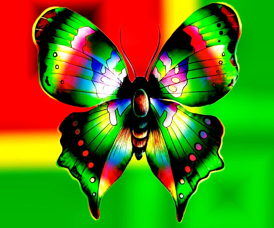 Colorful Butterflies | colorful butterfly abstract design ...