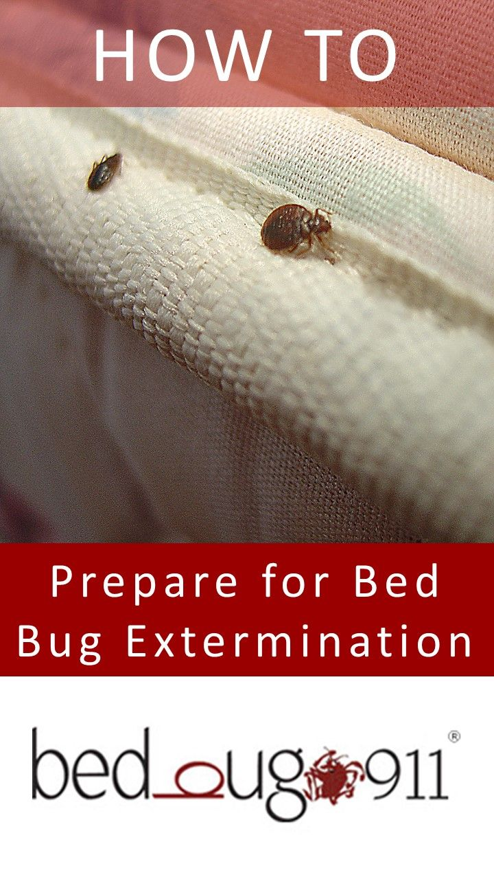 Pest and Bug control is the rule or the officials of a