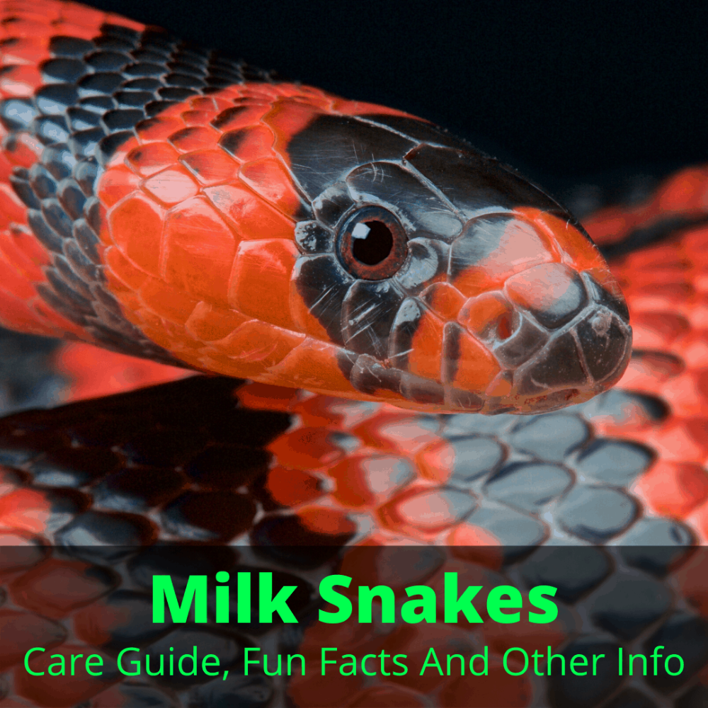 Pin On Pet Snake Care