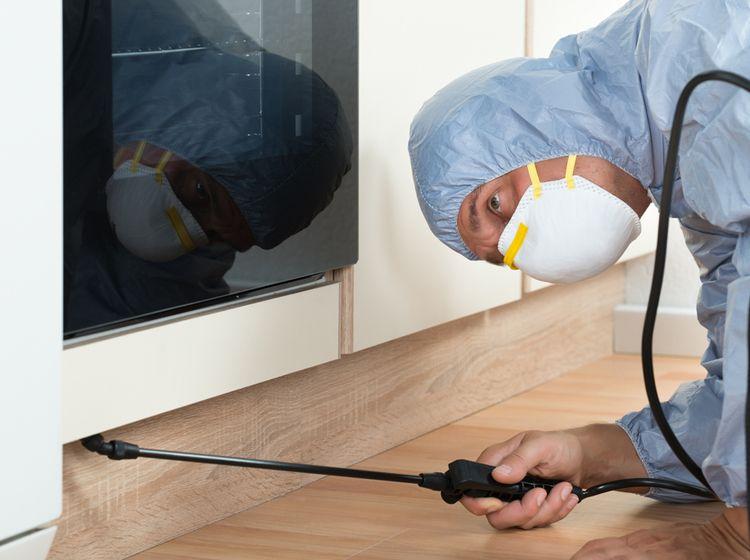 Marvelous Mausefallen Test Soforthilfe bei Maus oder Ratte im Haus und Garten Ungeziefer im Haus Pinterest Haus Oder and Garten