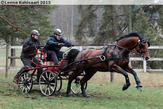 Finnish Warmblood gelding El Carillo (by Electro out of Carissima III by Calypso II) participating in combined driving