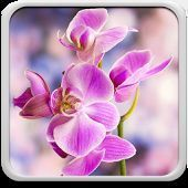 Orchid Wallpapers - Carmina Mix - #Carmina # Hintergrundbilder #Mix #O ...   - O... - #Carmina #Hintergrundbilder #Mix #orchid #Wallpapers #orchideenpflege Orchid Wallpapers - Carmina Mix - #Carmina # Hintergrundbilder #Mix #O ...   - O... - #Carmina #Hintergrundbilder #Mix #orchid #Wallpapers #orchideenpflege