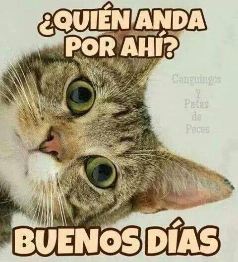Buenos Dias Grupo Imagenes Y Memes Super Divertidos Para Whatsapp Fraseshoy Org Frases De Buenos Dias Buenos Dias Con Gatos Buenos Dias