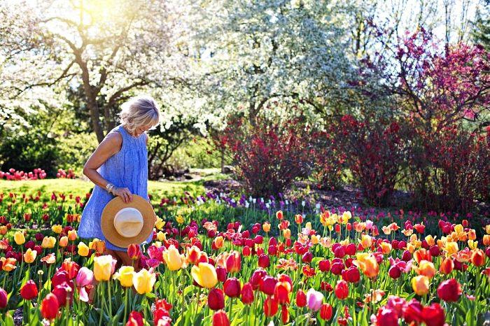 Conseils pour planter les bulbes à fleurs en automne en