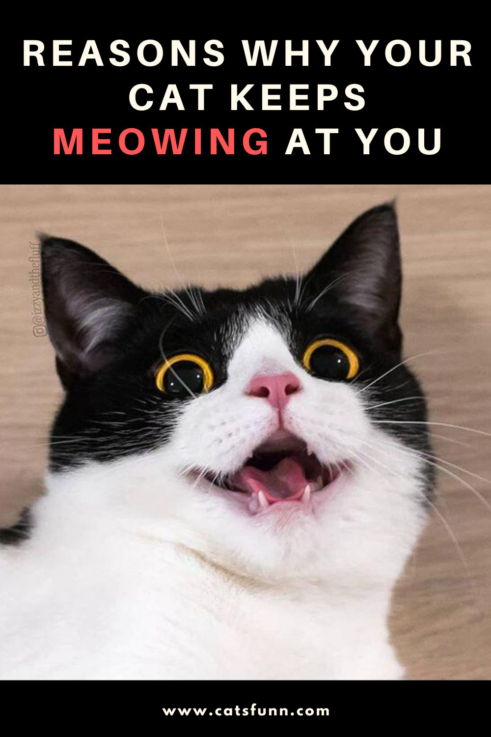 8 Reasons Your Cat Won T Stop Meowing At You Cats Cat Keeps Meowing Kittens