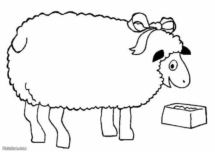 Eid Picture To Colour Coloring Pages Funny Sheep