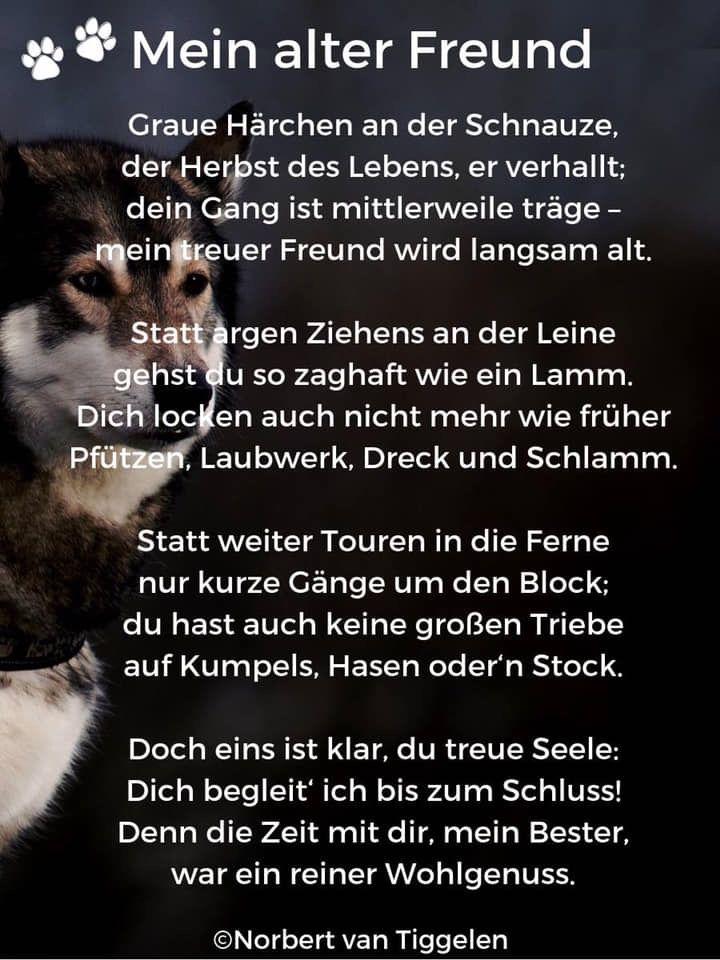 Pin Von Ingo Tielke Auf Hunde Hunde Gedichte Sprüche