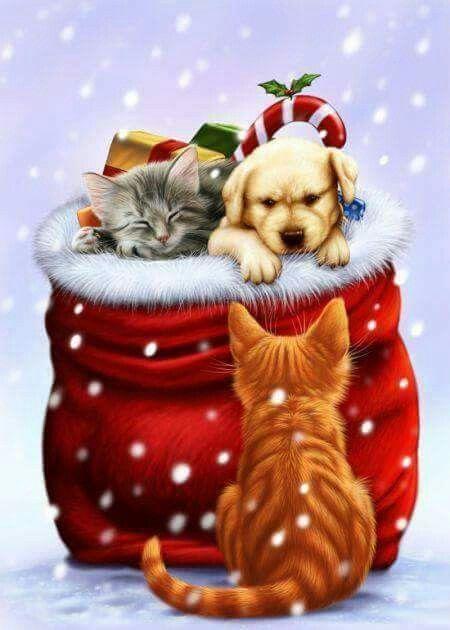 Botita con gatitos.