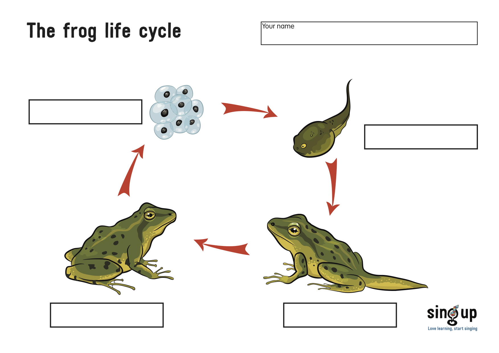 The Frog Life Cycle Worksheet Leap Into The Fantastic