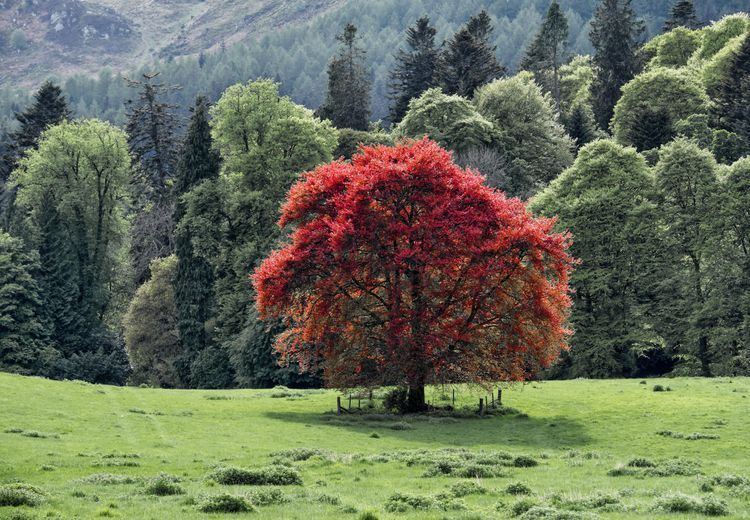 Five Common Beech Trees for Your Landscape Plants near