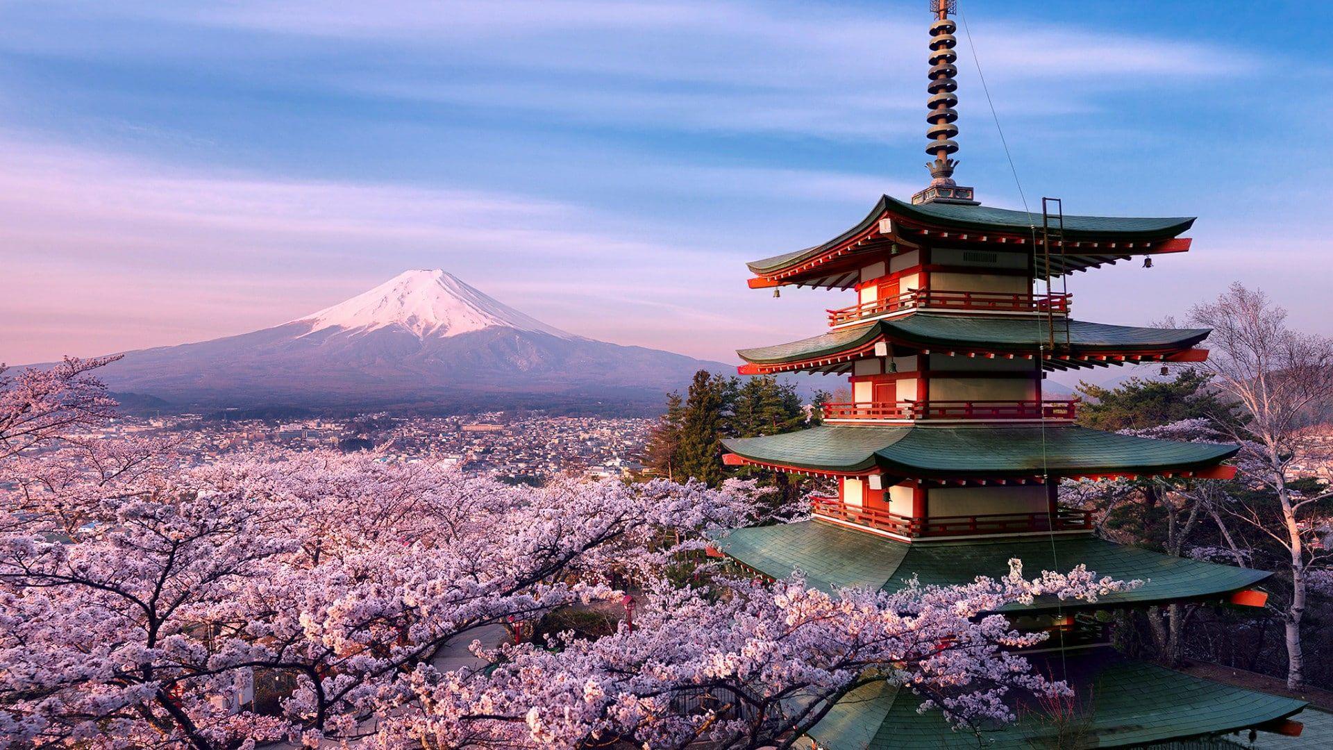 cherry blossom #volcano #mountain #fuji ...