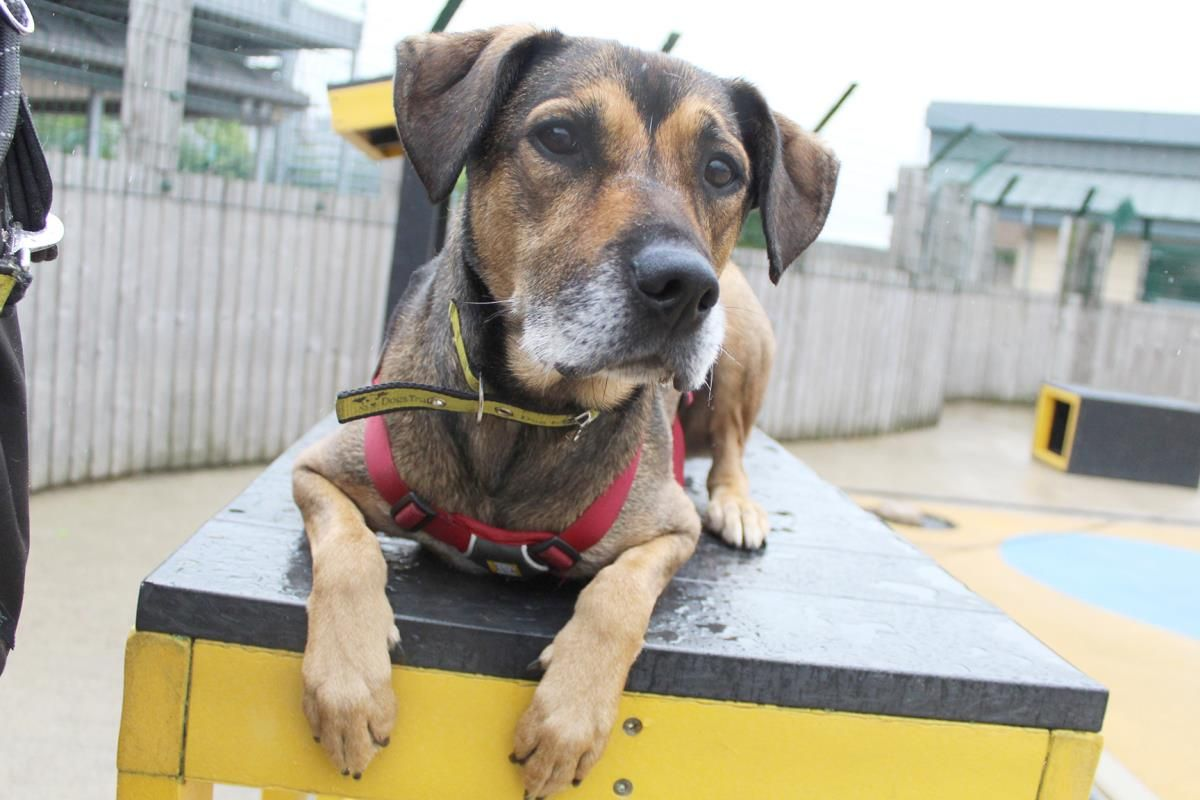 Adopt a Dog Benji, A Crossbreed Dogs Trust Dog