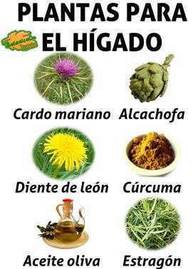 Plantas medicinales para el higado recetas varias - Meteorismo remedios ...