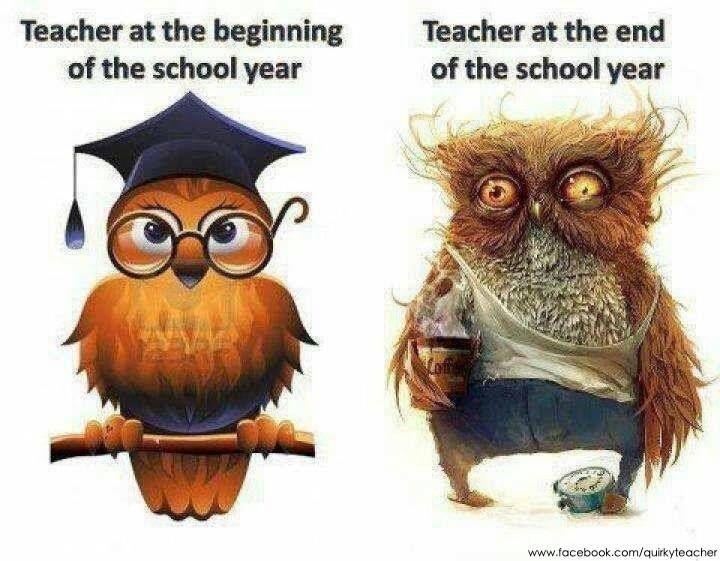 Pin By Mia On Funny Teacher Quotes Funny Teacher Humor School Humor