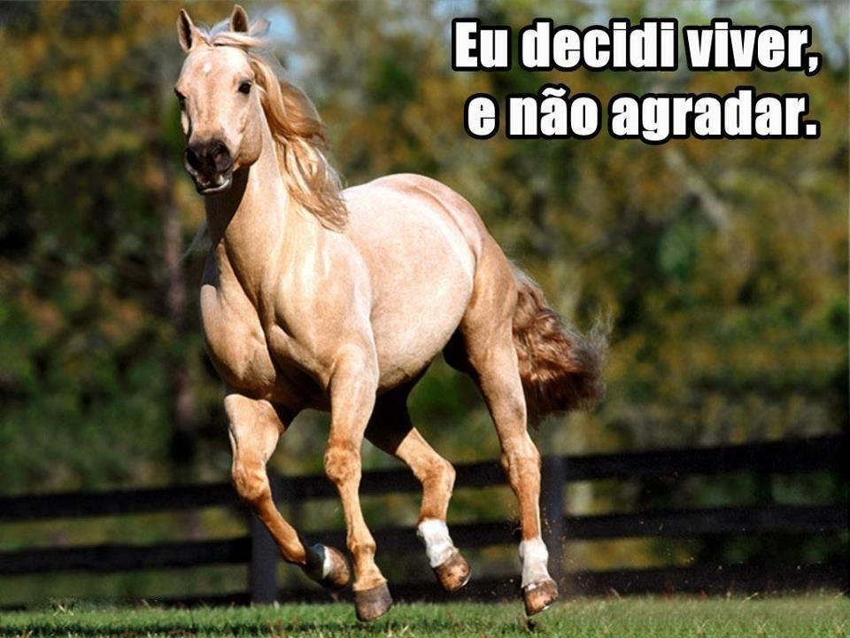 Resultado De Imagem Para Frases De Cavalos Cavalos Pinterest Frases De Cavalo Cavalo E Frases