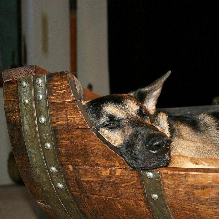 Hundebett Selber Bauen Anleitung hundebett selber bauen das alte weinfass wird zu schlafoase ihres