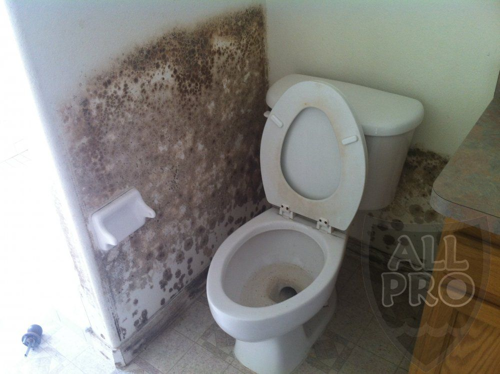 Tampa Mold Removal and Remediation Experts   www.MoldTampa.com