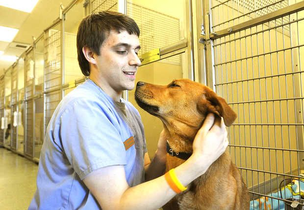 Lewiston More Than 150 Local Dogs And Cats Found New Homes Last
