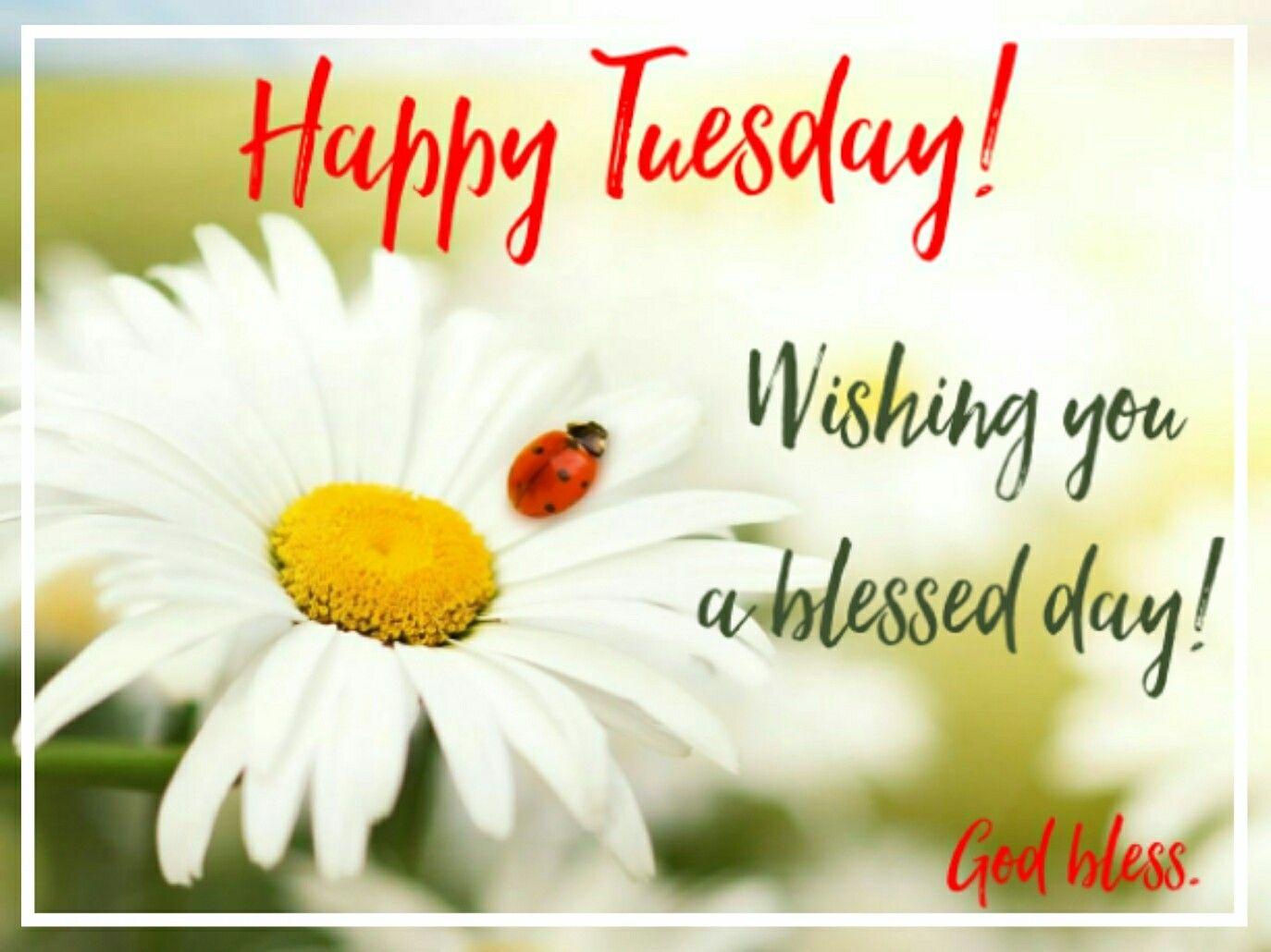 Good Morning Happy Tuesday Goodmorning Goodmorningpost Good Morningpost Morning Workgrind Gm Wor Good Morning Tuesday Morning Blessings Happy Tuesday